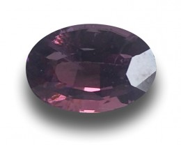 Natural Purple Sapphire | Loose Gemstone | Sri Lanka - New