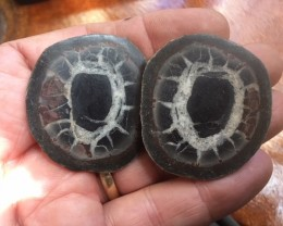 50 million year old Moroccan septarian nodule  PPP 1740