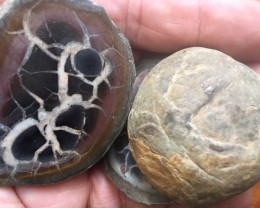 50 million year old Moroccan septarian nodule  PPP 1744