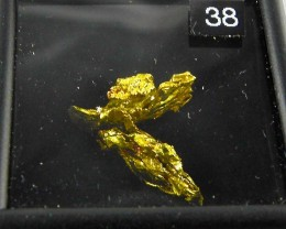 1.5  grams of crystallized gold nugget  from The Round Mountain Gold Mine N