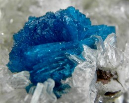 Very Rare Cavansite display specimen from India list price price $898.00