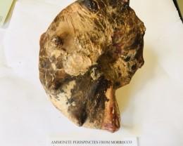 3.45 kilo Ammonite from Morocco