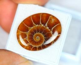 20.35Ct Gem Quality Ammonite Madagascar Cabochon Gemstone V421
