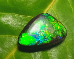 21.5mm Ammolite from Canada Conflict Free