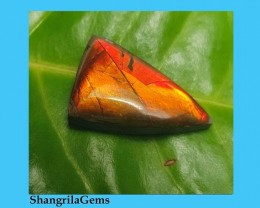 21mm Ammolite trillion arrow cabochon from Alberta, Canada.