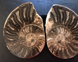 .880 Kilo Large polished Choffaticeras ammonite split Morocco SU 207