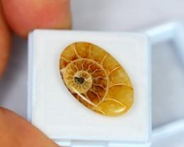 9.97ct Natural Ammonite Madagascar Cabochon Lot LZ211