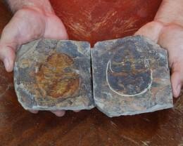 1.21Kilo Split Specimen Trilobite on matrix from Morocco SU 194