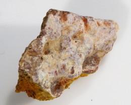 11.00Cts  Fossil Dinosaur Bone  Morocco SU 259