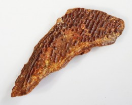 16.60Cts  Fossil Dinosaur Skin Morocco SU 256