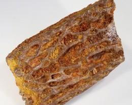 165Cts  Fossil Dinosaur Bone  Morocco SU 253