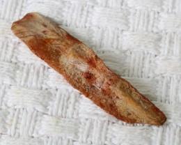 73.50Cts long   Fossil Dinosaur Bone   Morocco SU 270