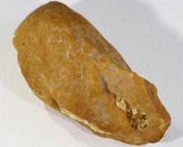 33.05Cts  Fossil Dinosaur Bone / scute   Morocco SU 265