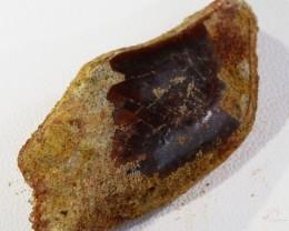 46.70Cts  Fossil Dinosaur Bone / scute   Morocco SU 267