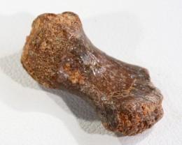 10.80Cts  Fossil Dinosaur Bone   Morocco SU 266
