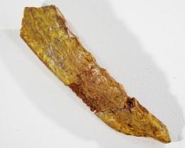 33.45Cts Jaw bone Fossil   Morocco  SU 335