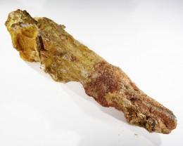 520Cts Rare Jaw bone Fossil Morocco SU401