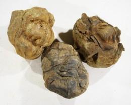 400cts Morroco parcel 3 Tribolite, SU411