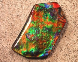 EXTREMELY UNIQUE PATTERN & COLOR Natural Ammolite Gem Collector