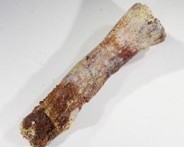 433Cts Moroccan undefined Dinosaur Bones Fossil SU433