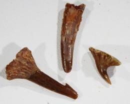 Collectors set Dinosaur teeth from Morocco  SU449