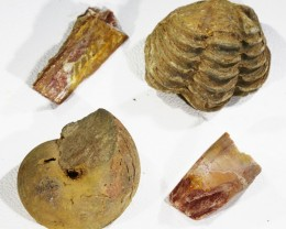 Collectors set fossils from Morocco  SU457