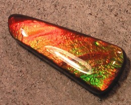 BEAUTIFUL BRIGHT COLOR CHANGER  Ammolite Gemstone Natural coated