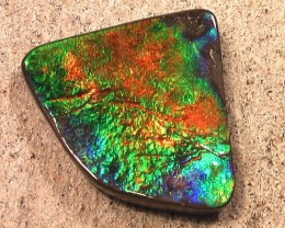 EXCELLENT RAINBOW Natural Ammolite Gemstone 'Full of Color'