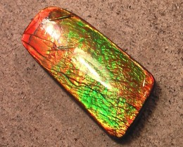 CRAZY $1 Ammolite COLOR CHANGER 'Beautiful crisp colors' Excellent Natural