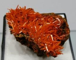 Crocoite on matrix - 20 grams - Tasmania