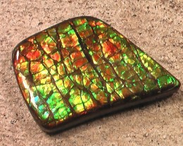 NICE GREENS Dragonskin Natural Ammolite Gemstone