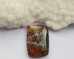 82ct Natural Aommonite fossil Cabochon(18032021)