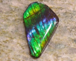 24.45 ct AMMOLITE CAB - GREAT COLORS!  GREAT PRICE!
