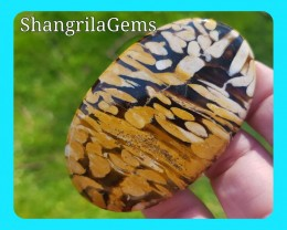 68mm Peanut wood Jasper - petrified wood cabochon 148ct