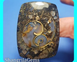 Colus Fossil cabochon with video 49 by 36 by 5.5mm AAA