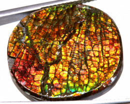 23.45  CTS  CANADIAN AMMOLITE PREFINISHED TBG-275