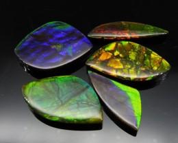 Ammolite 61.69 cts 5 stones Wholesale Lot
