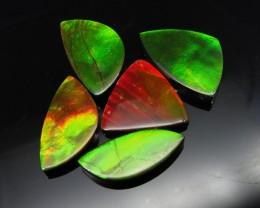 Ammolite 64.81 cts 5 stones Wholesale Lot