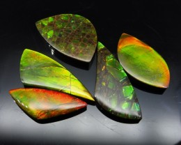 Ammolite 84.74 cts 5 stones Wholesale Lot