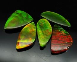 Ammolite 45.32 cts 5 stones Wholesale Lot