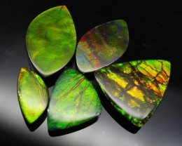 Ammolite 52.06 cts 5 stones Wholesale Lot