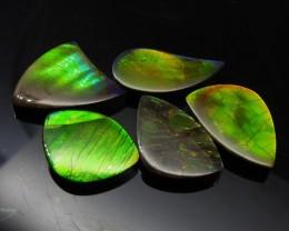 Ammolite 54.17 cts 5 stones Wholesale Lot