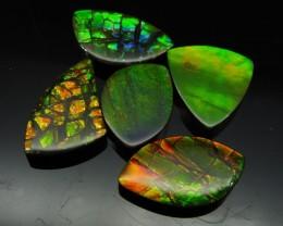 Ammolite 44.51 cts 5 stones Wholesale Lot