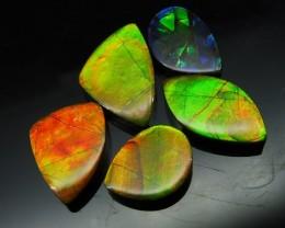 Ammolite 31.72 cts 5 stones Wholesale Lot