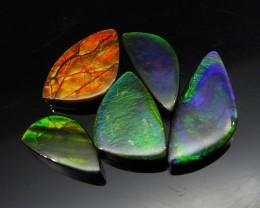 Ammolite 30.25 cts 5 stones Wholesale Lot