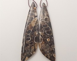 66.5ct New Arrival Natural Aommonite Fossil Earring Pair(18061009)