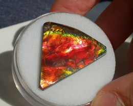 24,0ct Ammolite - Great colours!