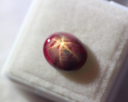 4.86Ct Natural 6 Rays Star Ruby Lot LZ733