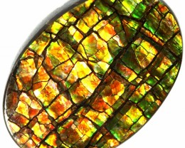 6.50 CTS AMMOLITE STONE FROM CANADA [SAFE103]