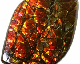 12.10 CTS AMMOLITE STONE FROM CANADA [SAFE118]